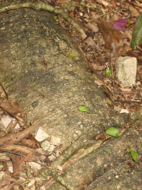 Trajet san cristobal de las casas palenque for Portent feuilles
